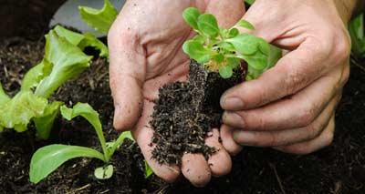Pflanzen Kaufen Pflanzen Versand Gartenversandhausde
