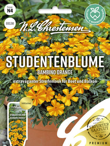 Samen -  Studentenblume Bambino Orange