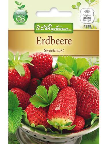 Ganz und zu Extrem Erdbeere Sweetheart | Samen für verschiedene Gemüsesorten #EB_68