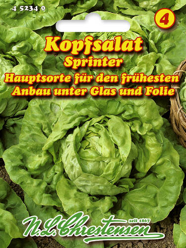 Samen - Kopfsalat Sprinter (Portion)