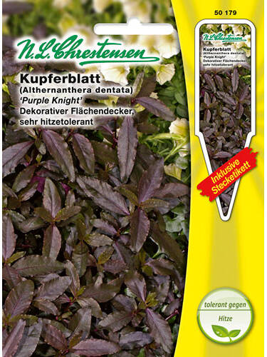 Samen - Kupferblatt Purple Knight (Portion inkl. Stecketikett)