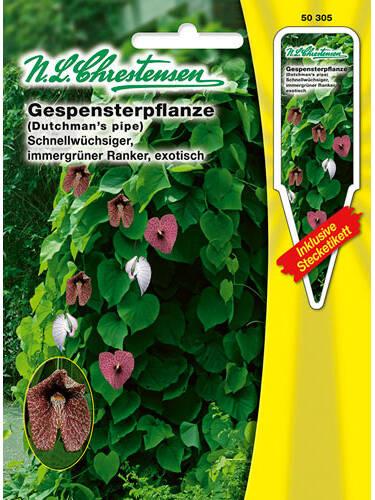 Samen - Gespensterpflanze