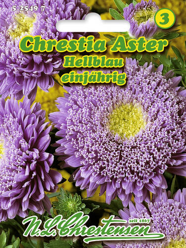 Samen - Chrestia-Aster Hellblau (Portion)