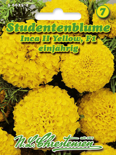 Samen - Studentenblume Inca II Yellow F1 (Portion)