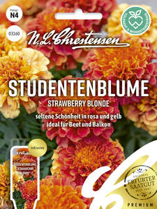 Samen - Studentenblume Strawberry Blonde
