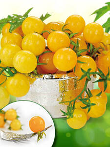 Samen - Wildtomate Golden Currant (Portion)