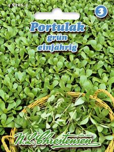 490725 Roter Sonnenhut   Saatgut Samen  Heilpflanze