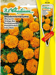 Samen -   Studentenblume Orange Boy